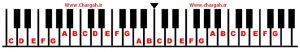 آموزش پیانو مبتدی - ترتیب قرار گرفتن نت های کلاویه های سفید